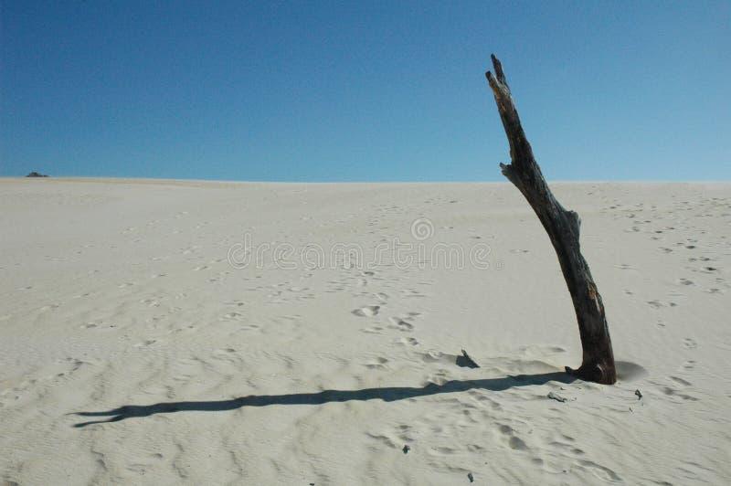 Dunas en Fraser Island, Australia foto de archivo libre de regalías