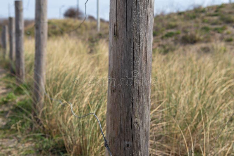 Dunas en Holanda llena con las hierbas foto de archivo libre de regalías
