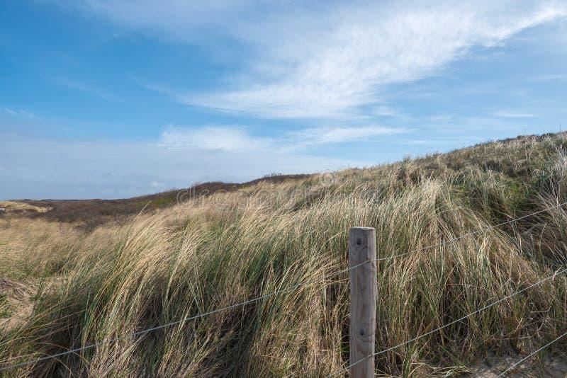 Dunas en Holanda llena con las hierbas fotos de archivo libres de regalías