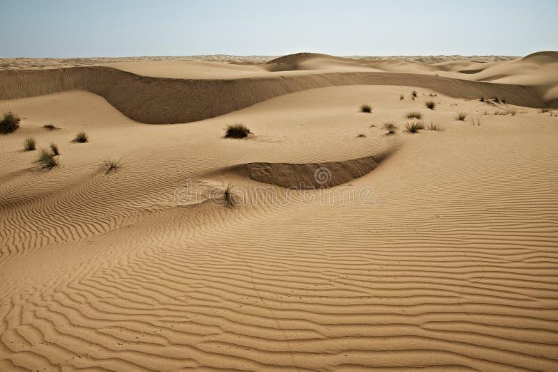 Dunas enormes do deserto Crescimento dos desertos na terra foto de stock