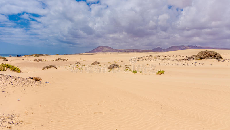 Dunas of sand near Corralejo town stock images