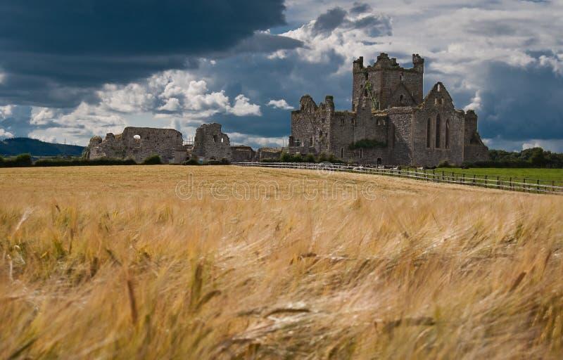 dunbrody abbey royaltyfri bild