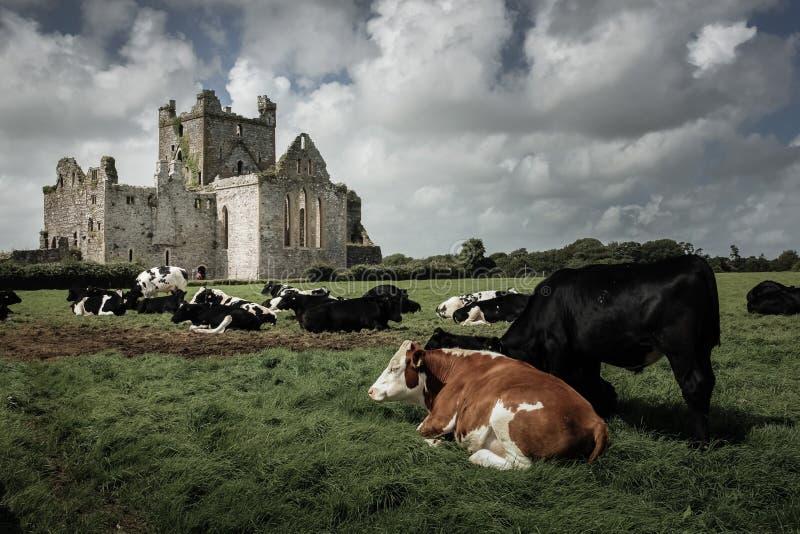 dunbrody abbey ståndsmässiga Wexford ireland royaltyfria foton