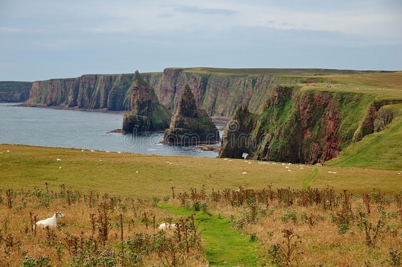 Duncansby Stacks, Scotland royalty free stock image