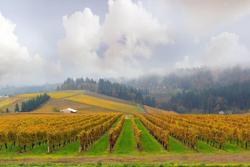 Dundee Oregon winnica Podczas sezonu jesiennego zdjęcia stock