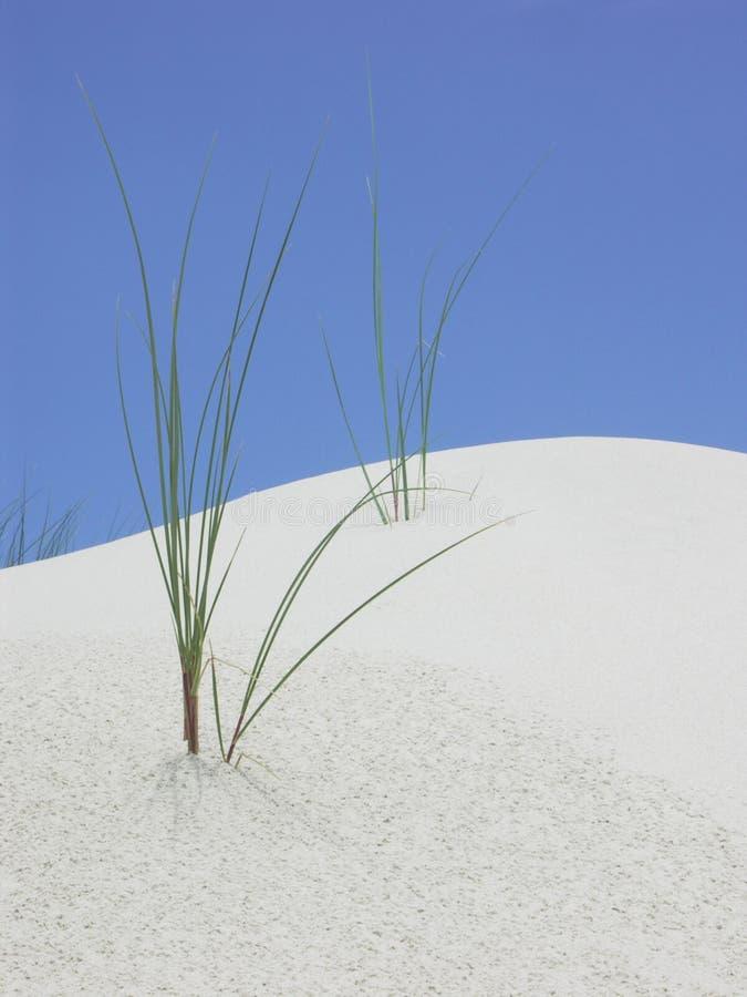Dune royalty free stock photo