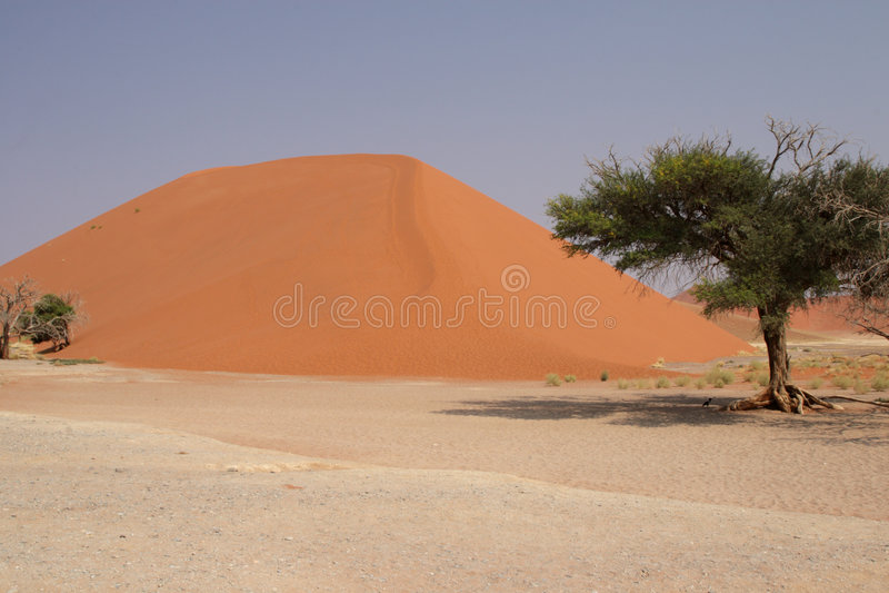 dune 45 image libre de droits