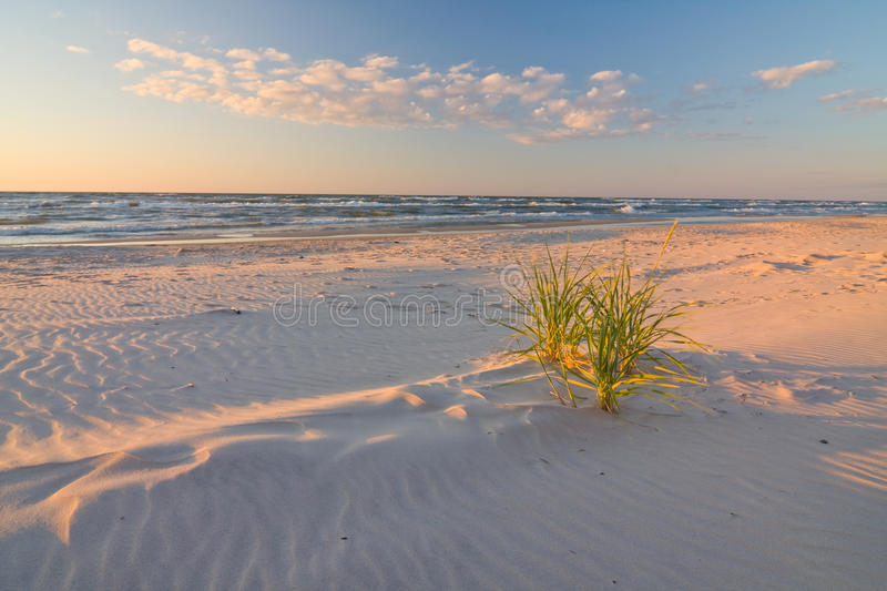 Dune on Beach at Sunset royalty free stock photos