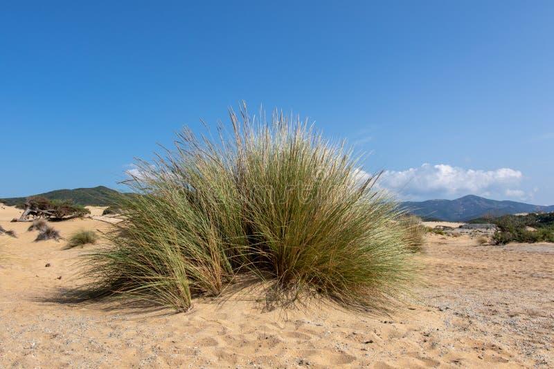 Dune de Piscinas, Sardaigne Italie photo libre de droits