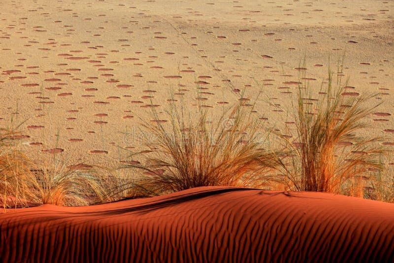 Dune de sable avec des ondulations et des cercles féeriques images stock