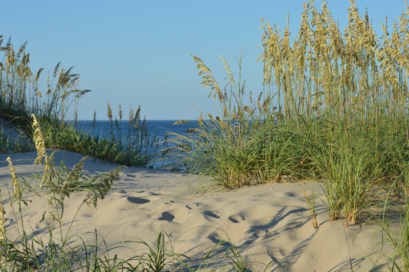 Dune de sable avec l'avoine de mer photo stock