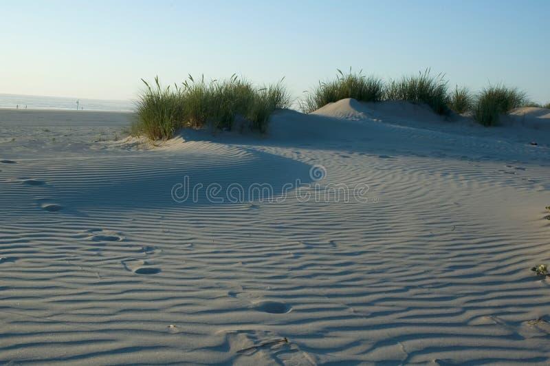 Dune De Sable Herbeuse Image stock