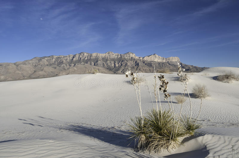 Dune del bacino del sale in Guadalupe Mountains National Park immagini stock