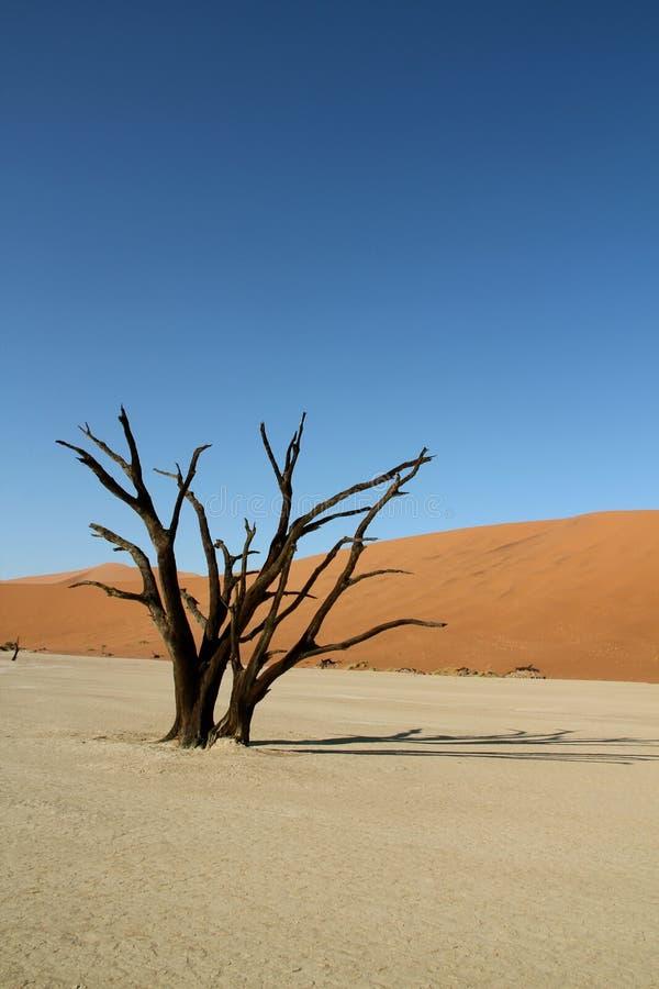 Dune del deserto ed albero guasto fotografia stock