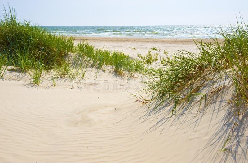 Dune del Sandy su una spiaggia di Jurmala. fotografie stock