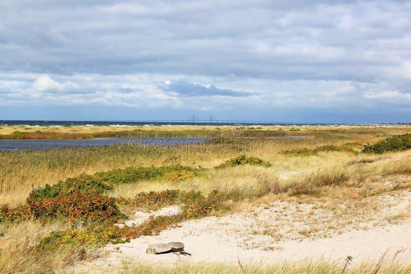 Dune di Falsterbo nel sud della Svezia fotografie stock libere da diritti