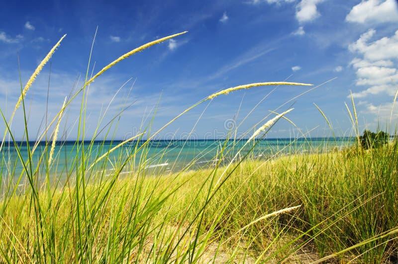 Dune di sabbia alla spiaggia immagine stock