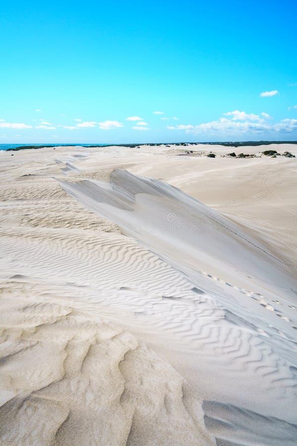 Dune di sabbia bianche di lancelin, Australia occidentale 12 fotografia stock