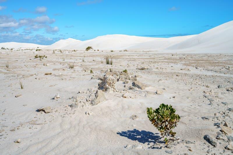 Dune di sabbia bianche di lancelin, Australia occidentale 20 fotografia stock