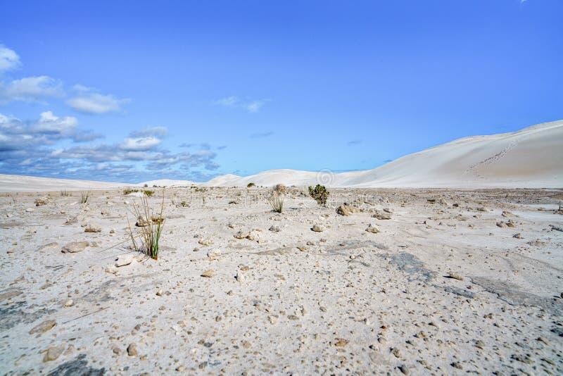 Dune di sabbia bianche di lancelin, Australia occidentale 18 immagine stock