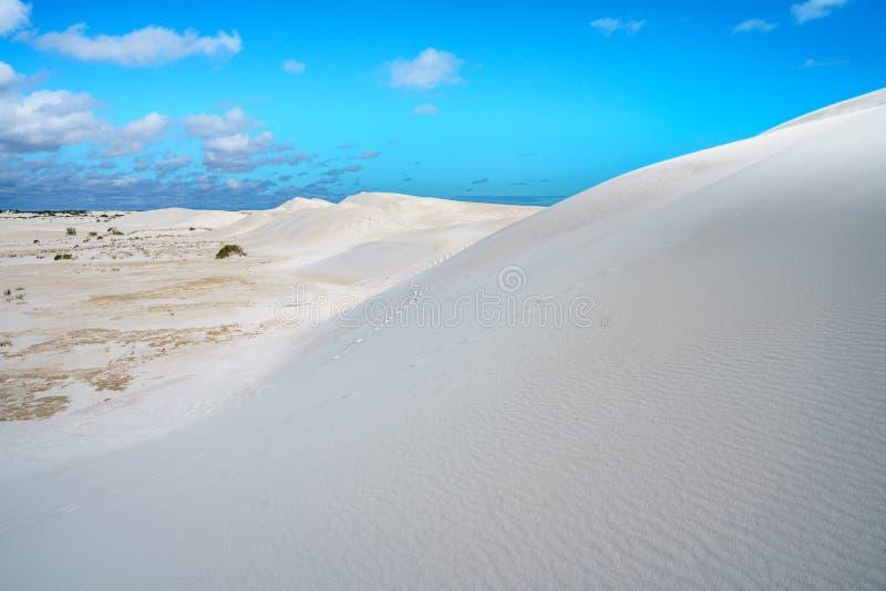 Dune di sabbia bianche di lancelin, Australia occidentale 25 immagine stock