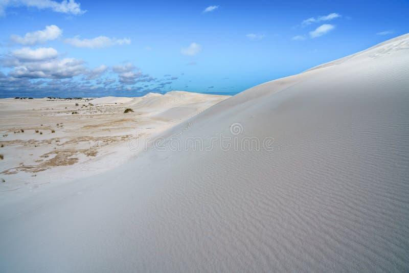 Dune di sabbia bianche di lancelin, Australia occidentale 26 fotografia stock