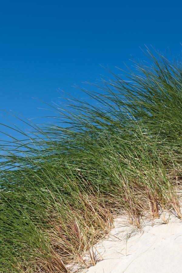 Dune di sabbia con erba e cielo blu alti, spiaggia di Luskentyre, isola di Harris, Scozia fotografie stock libere da diritti