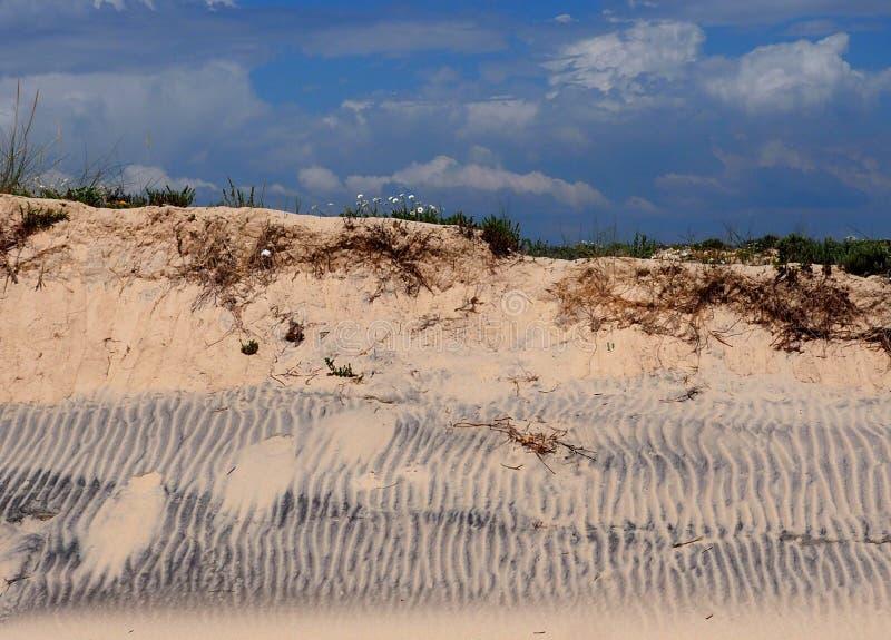 Dune di sabbia con le ondulazioni su Ilha Da Culatra Portogallo immagine stock libera da diritti