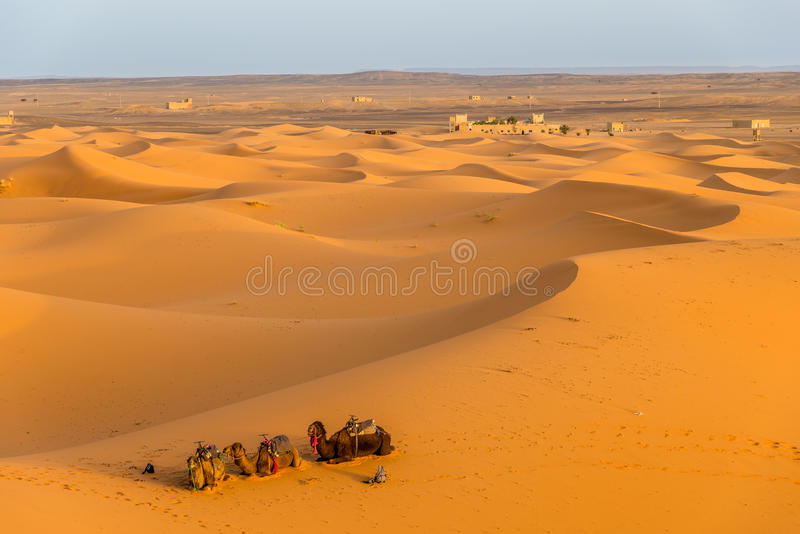 Dune di sabbia del deserto del Sahara nell'area ERG Chebbi Merzouga fotografia stock