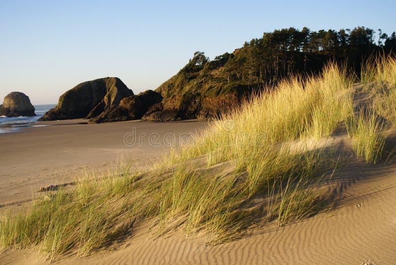Dune di sabbia della spiaggia del cannone fotografia stock