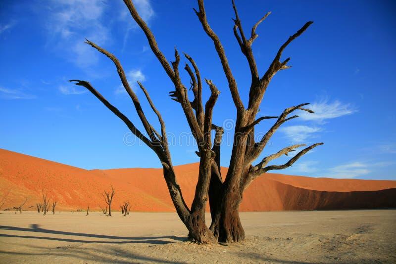 Dune di sabbia di Sossusvlei fotografia stock libera da diritti