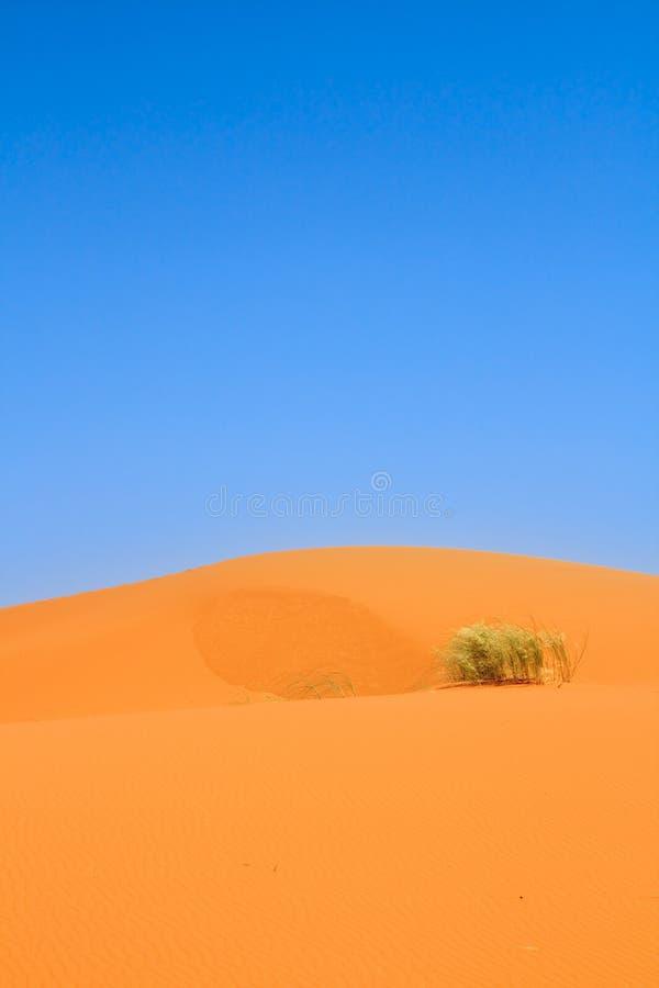 Dune di sabbia e un trapuntare solo di erba fotografia stock