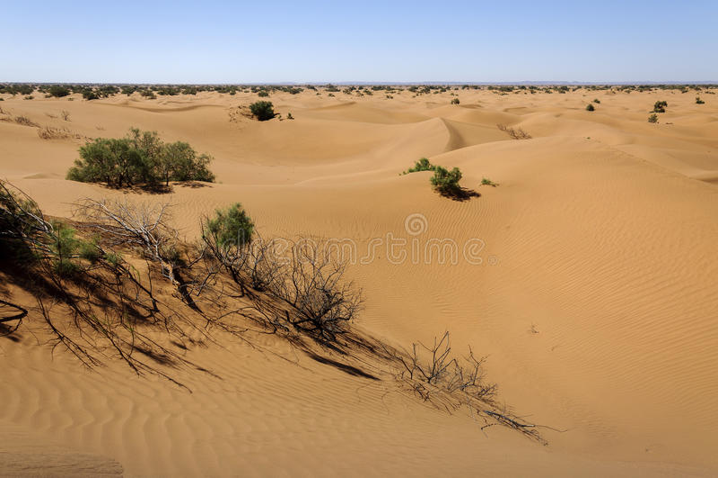Dune di sabbia, Hamada du Draa, Marocco. fotografie stock