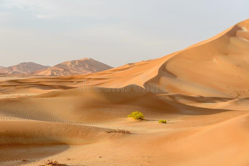 Dune di sabbia nel deserto dell'Oman (Oman) fotografie stock libere da diritti