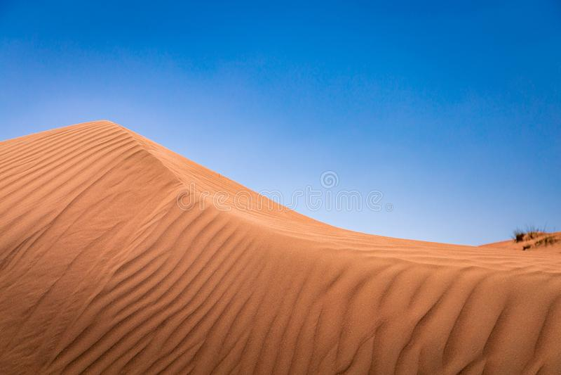 Dune di sabbia nel deserto dorato di Al Wasil, Oman centrale fotografia stock libera da diritti