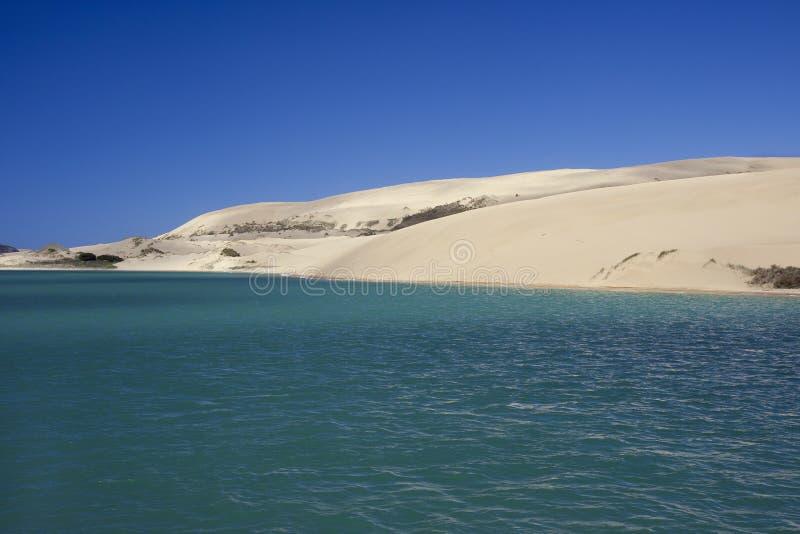 Dune di sabbia nude nel porto di Hokianga fotografia stock