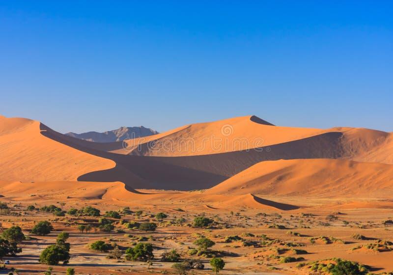 Dune di sabbia rosse del deserto di Namib alla luce di mattina fotografia stock