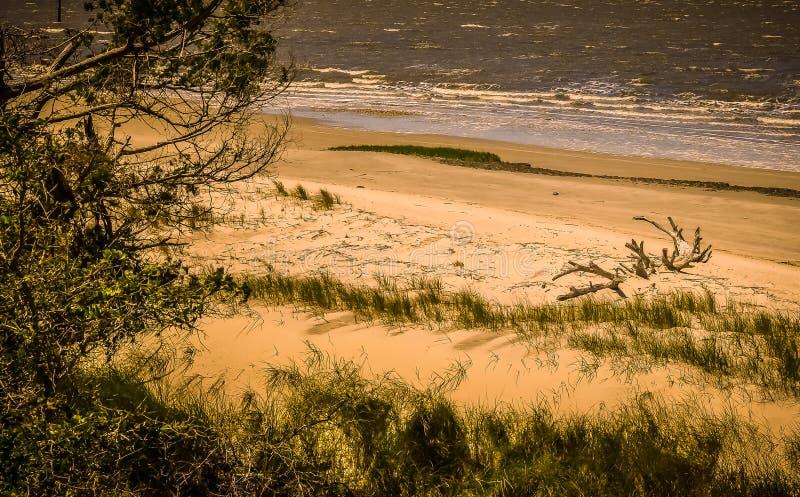 Dune e legname galleggiante di sabbia su una spiaggia dorata fotografia stock libera da diritti