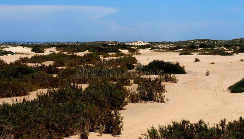 Dune e vegetazione di sabbia su Ilha De Culatra Portogallo immagine stock