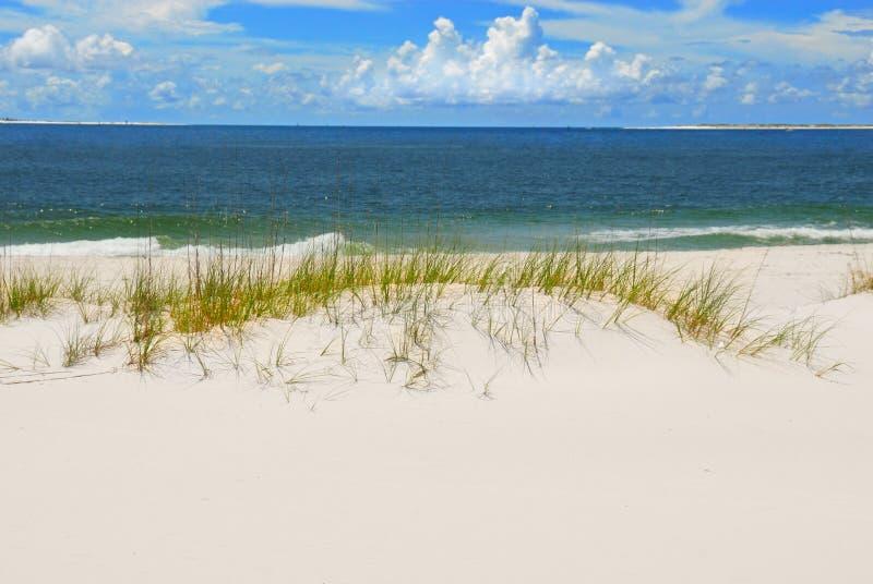 Dune et herbes de sable sur la plage image libre de droits