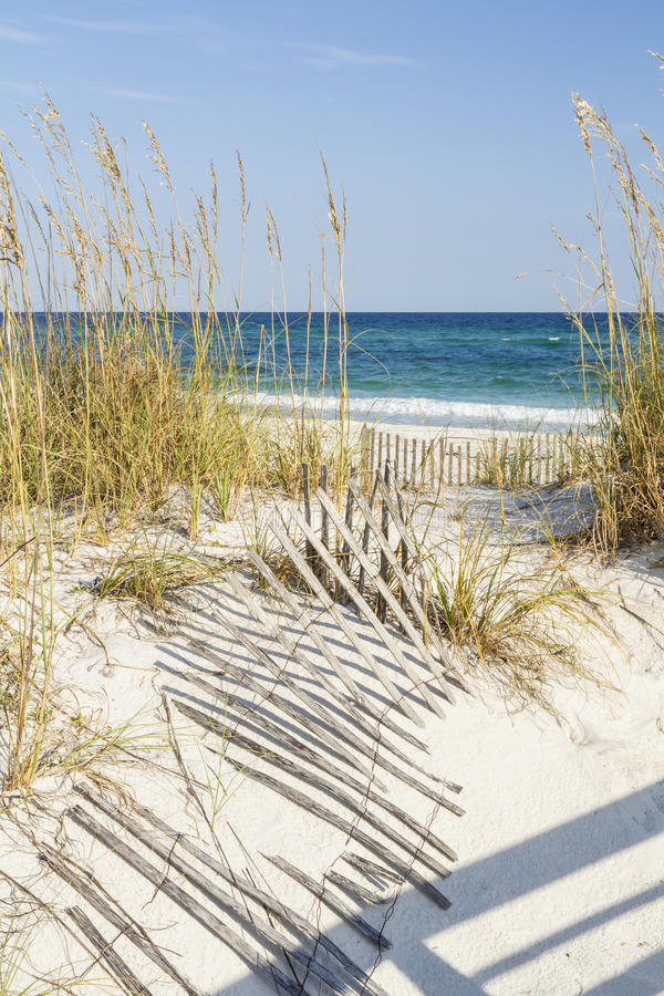 Dune Fences at Gulf Islands National Seashore. Dune fence and sea oats on the dunes at Pensacola Beach, Florida on Gulf Islands National Seashore royalty free stock photos