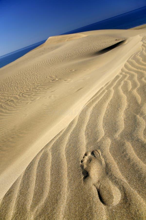 Dune Footprint royalty free stock photos