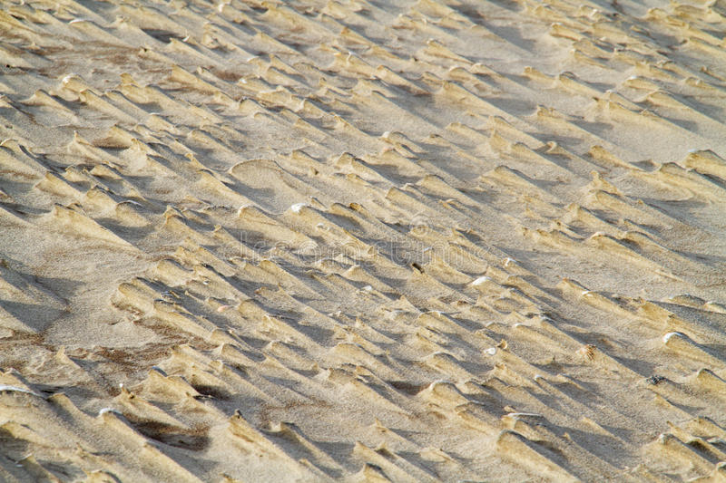 Dune formation. Formation of small dunes in the lee of shells stock photos