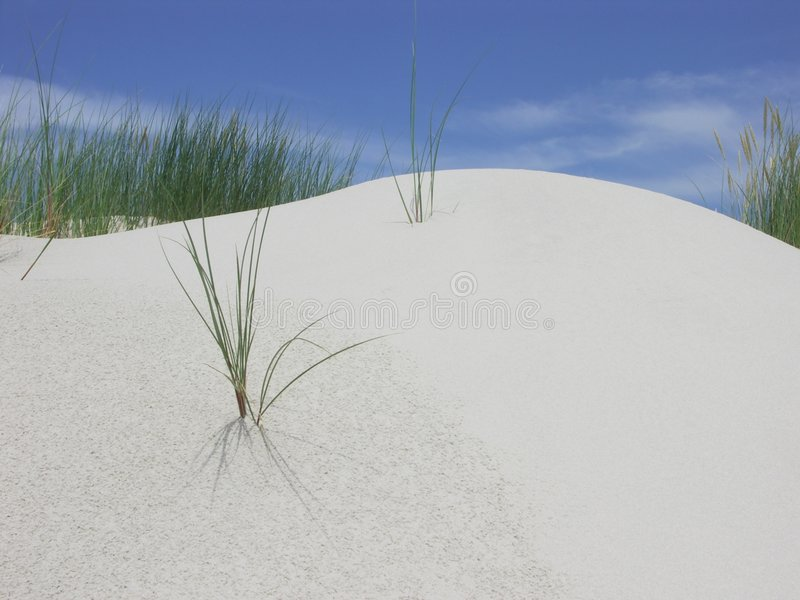 Dune and grass royalty free stock photos