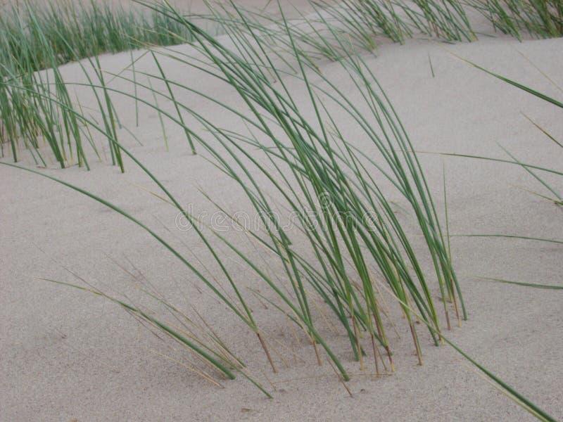 Dune grass royalty free stock photos