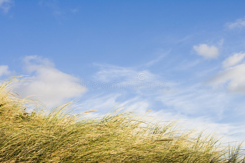Download Dune grass stock image. Image of relaxation, shell, ocean - 4011353