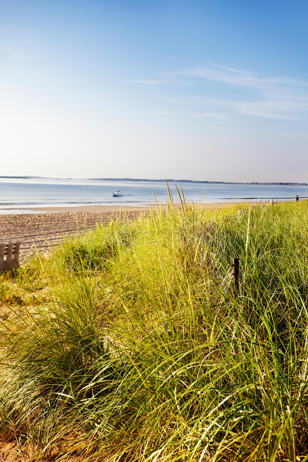 Download Dune Grass Maine Beach Royalty Free Stock Photos - Image: 19774238
