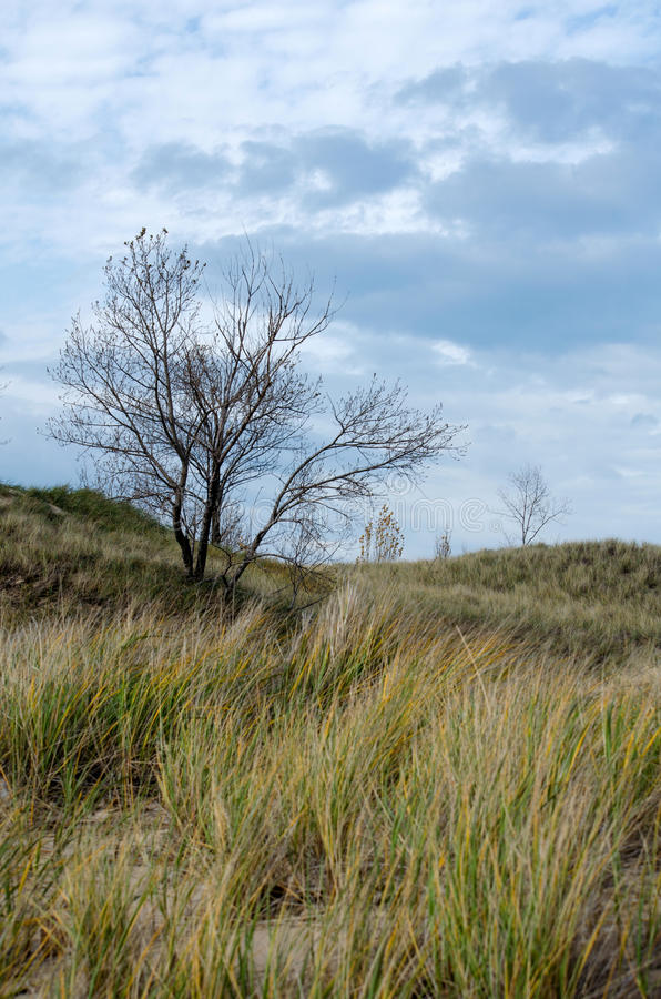 Dune grass and trees royalty free stock image