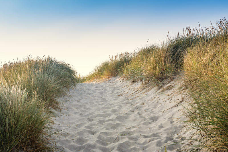Dune with green grass. View for the beach royalty free stock photos