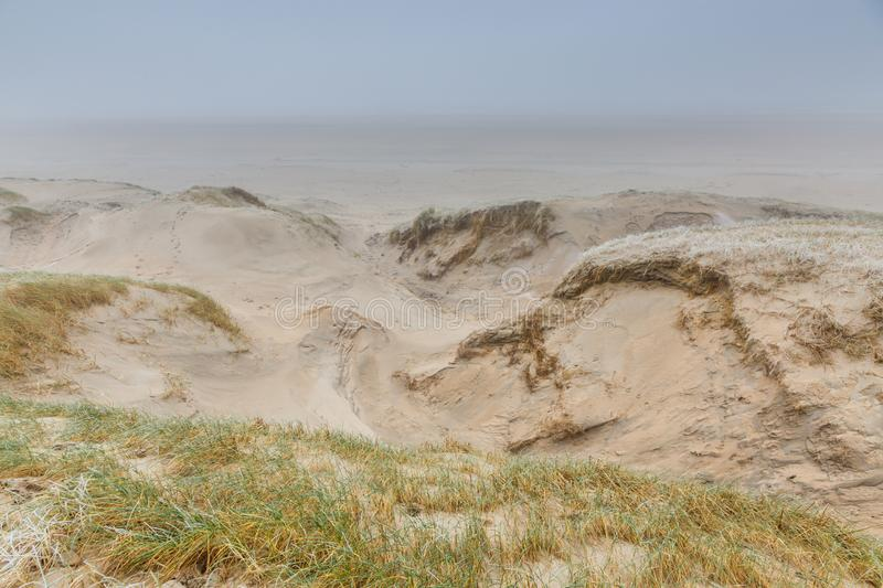 Dune landscape with deep carved windholes with dangerous steep edges. Winters dune landscape Dutch coast with by autumn storms deep carved out wind holes against stock images